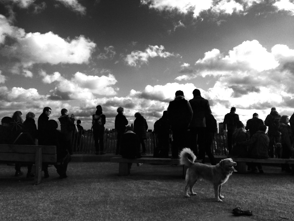 VIEW-GAZERS AND A VERY HAPP, SCENE-STEALING DOG.