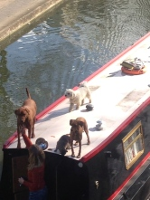 DOGS AHOY! (AND THEIR CAT FRIEND)