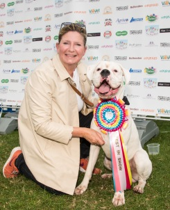 HANDSOME BARNEY, BEST IN SHOW, photo Julia Claxton.