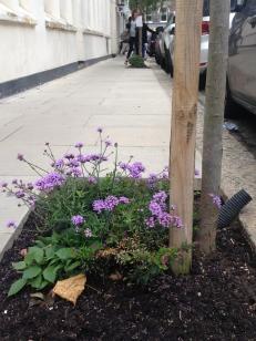 The guerrilla gardener of Erskine Road was hard at work....