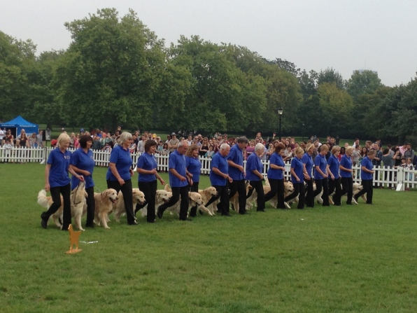 Golden Retrievers on parade at PupAid