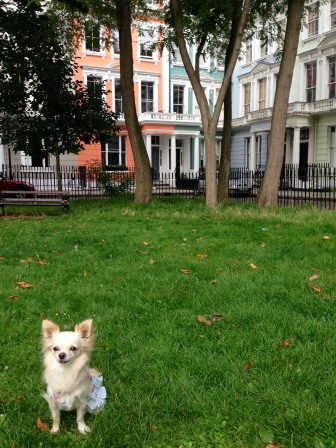 CHANEL IN HER ELEMENT IN PRIMROSE HILL
