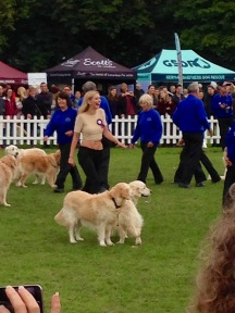 RACHEL RILEY AND THE GOLDEN RETRIEVER DISPLAY TEAM