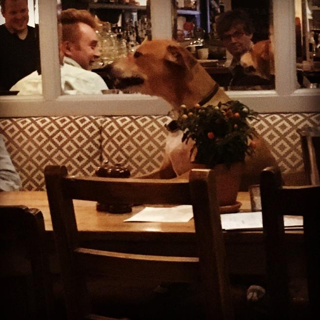 A DOG ENJOYING THE PUB QUIZ AT THE QUEENS