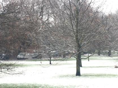 SNOWDAY PRIMROSE HILL
