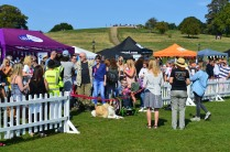SO MANY PUPAID HEROES IN THIS PHOTO!