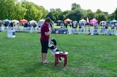 HEARING DOGS DISPLAY